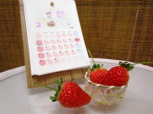 初苺〜ハウスで美味しそうに色づいてます〜