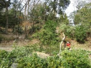 作業風景・樹木の伐採~通所部便り