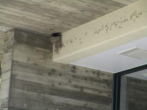 ツバメが巣を作りました♪